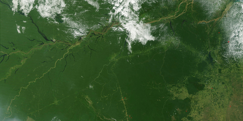 Forest view from satellite